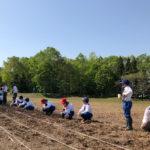 世界のひまわり畑」種まき一列に並んで